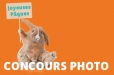 News Concours photo Paques Lapin